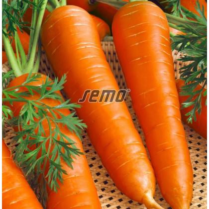 Berlikumer mrkva na skladovanie neskorá 10g