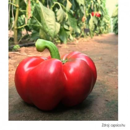 Bronco F1 paprika s paradajkovým tvarom 100 semien