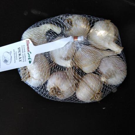 Dukát cesnak ozimný paličiak 7 - 14 hlávok