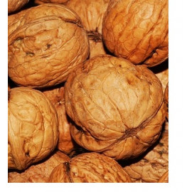 Apollo orech polopapierak veľký plod prostokorenný..