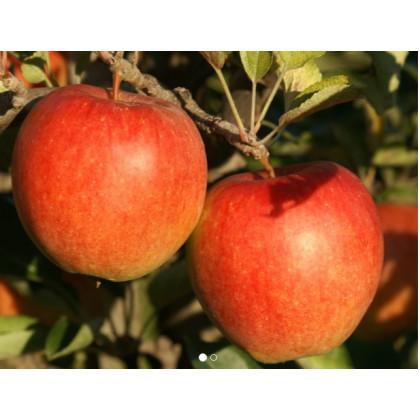 Braeburn jabloň zimná červená