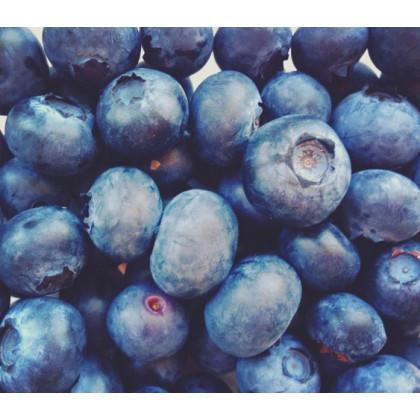 Chandler čučoriedka stredne skorá obrovske plody