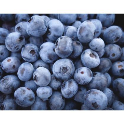 Darrow čučoriedka neskorá obrovské plody