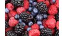 Drobné ovocie ovocné výpestky