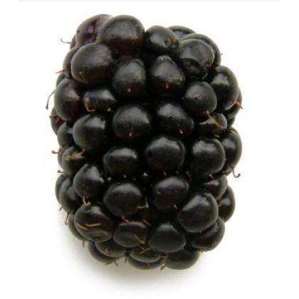 Merton Thornless černica neskorá beztŕna