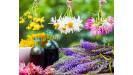 Bylinky koreniny liečivé rastliny