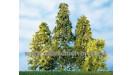 Stromy listnaté rôzne tvary