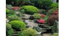 Okrasné rastliny stromy kríky letničky