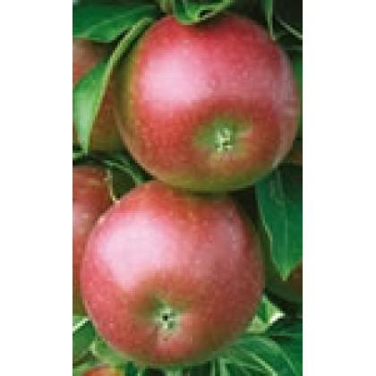 Redcats jabloň stĺpovitá jesenná červená C7,5/100-150cm