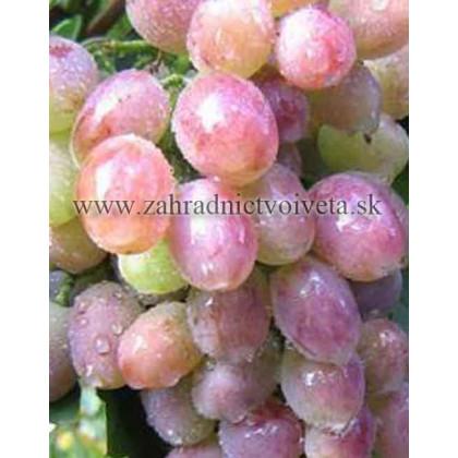 Jubilej Novočerkaska vinič stolový rezistentný ružový