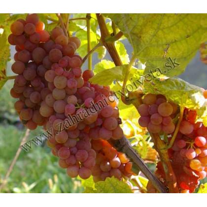 Milia vinič muštový ružový prostokorenný