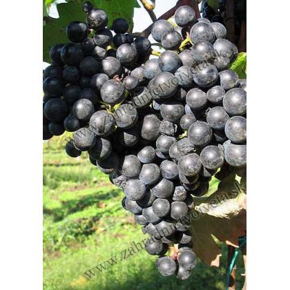 Nitra vinič muštový modrý C2L