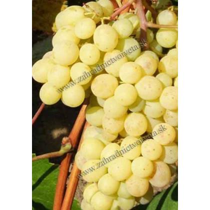 Pomaranč vinič stolový stredne skorý