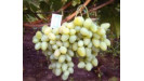 Vinič stolový klasické bezsemenné odrody