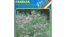 Facélia medonosná zelené hnojenie