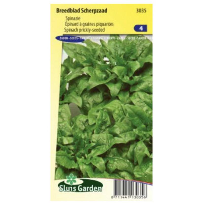 Breedblad špenát skorý jarný / neskorý jesenný 100 g