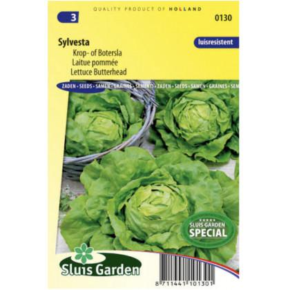 Sylvesta šalát ladovy 100 semien