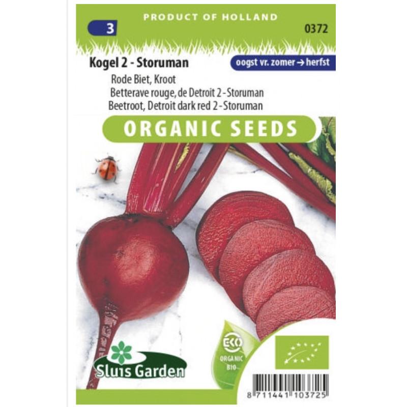 Storuman cvikla červená velka Bio 240 semien
