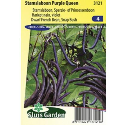 Purple Queen fazula fialová kríčková 75 g
