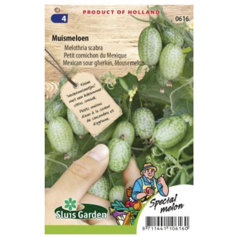 Melothria scabra uhorka špeciálna minimelón 15 semien