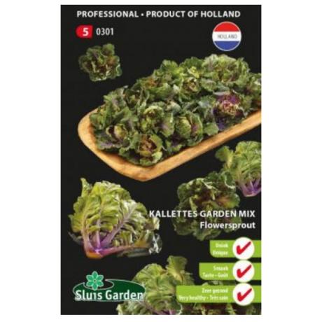 Kalettes Garden Mix kel 18 semien