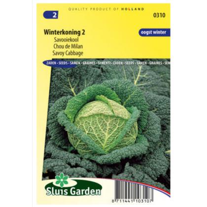 Winterkoning kel kučeravý 320 semien