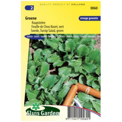 Groene okrúhlica korenistá 2200 semien