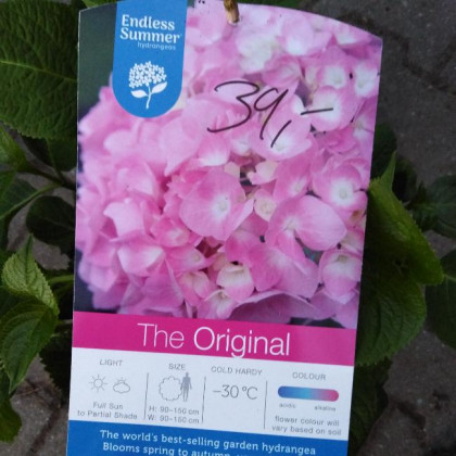 Endless Summer The Original Pink hydrangea hortenzia kontajner C5L