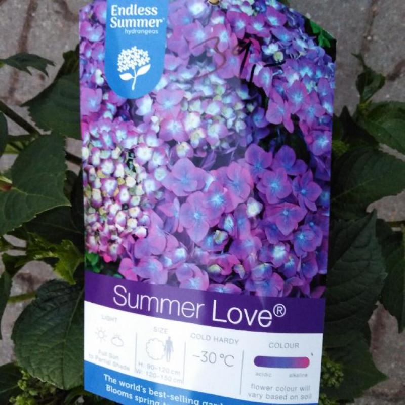 Endless Summer Love Blue hydrangea hortenzia kontajner C5L