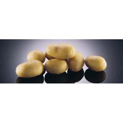 Colette zemiaky skoré mini hľúzy