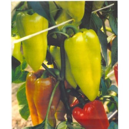 Anthea paprika osvedčená chladnejšie podmienky 0,2g