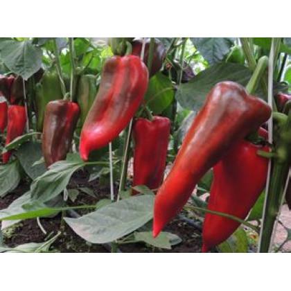 Kadet F1 paprika kápia veľmi veľká 250 semien