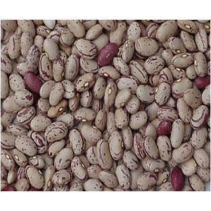 Rocco fazuľa kríčková semená predaj 1kg