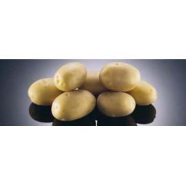 Agáta Sadbové zemiaky veľmi skoré