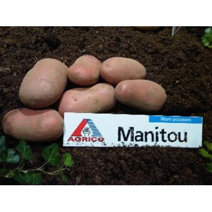 Manitou sadbové zemiaky červené 5kg