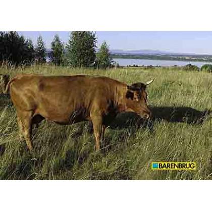 Kŕmna miešanka Green Spirit Standard Barenbrug 15kg
