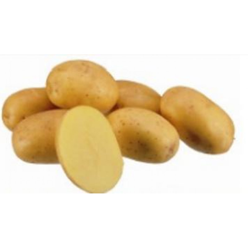 Constance sadbové zemiaky skoré tvrdé 5kg