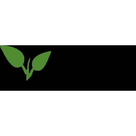 Tsema čierna ríbezla stredne skorá aromatická prostokorenná 3-4 výhony