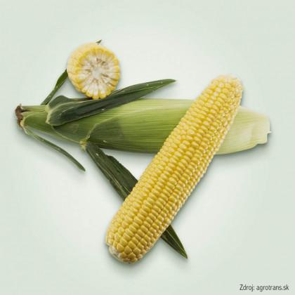 Gia F1 kukurica cukrová neskorá 500 semien
