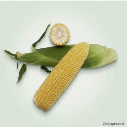 Royalty F1 kukurica cukrová odolná voči chorobám 500 semien