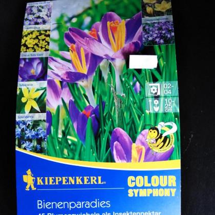 Včelí raj farebná symfónia 45 ks cibule okrasné