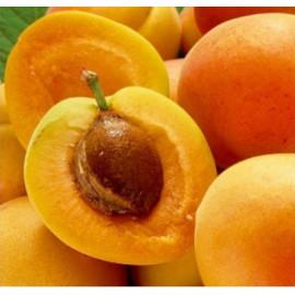 Early Orange marhuľa skorá samoopelivá