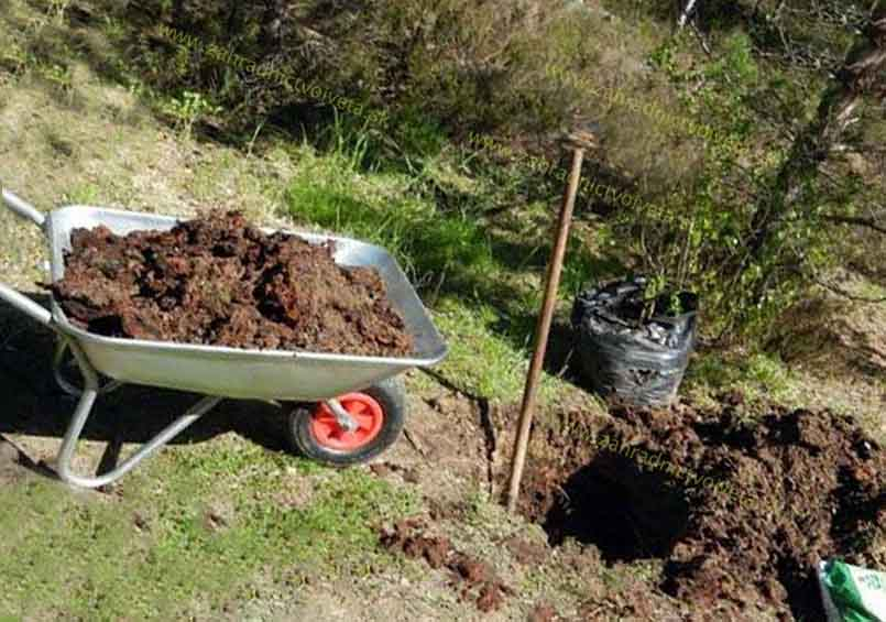 Výsadba ovocných stromkov